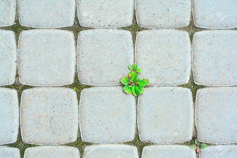 18811057-concepto-ecológico-pavimento-de-adoquines-con-una-planta-verde